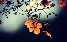 Flower 3876195 1920