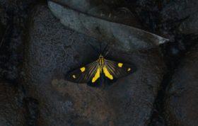 Butterfly Crop